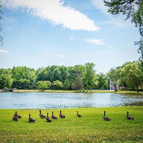 It's soooo hot!!! Looks like the ducks are ready for a swim.  #npsocial #newpaltz #sunynewpaltz