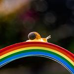 climbing rainbows
