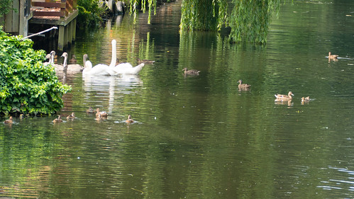 Feeding time, Newbridge