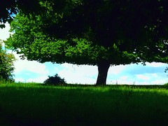 Sous un arbre