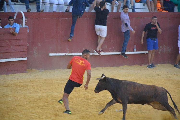toro aguardiente32