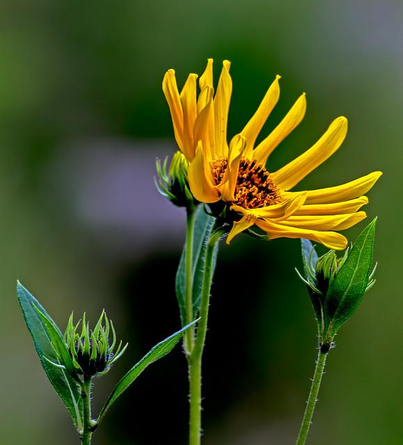 Wild-Flower-23-7D1-073118