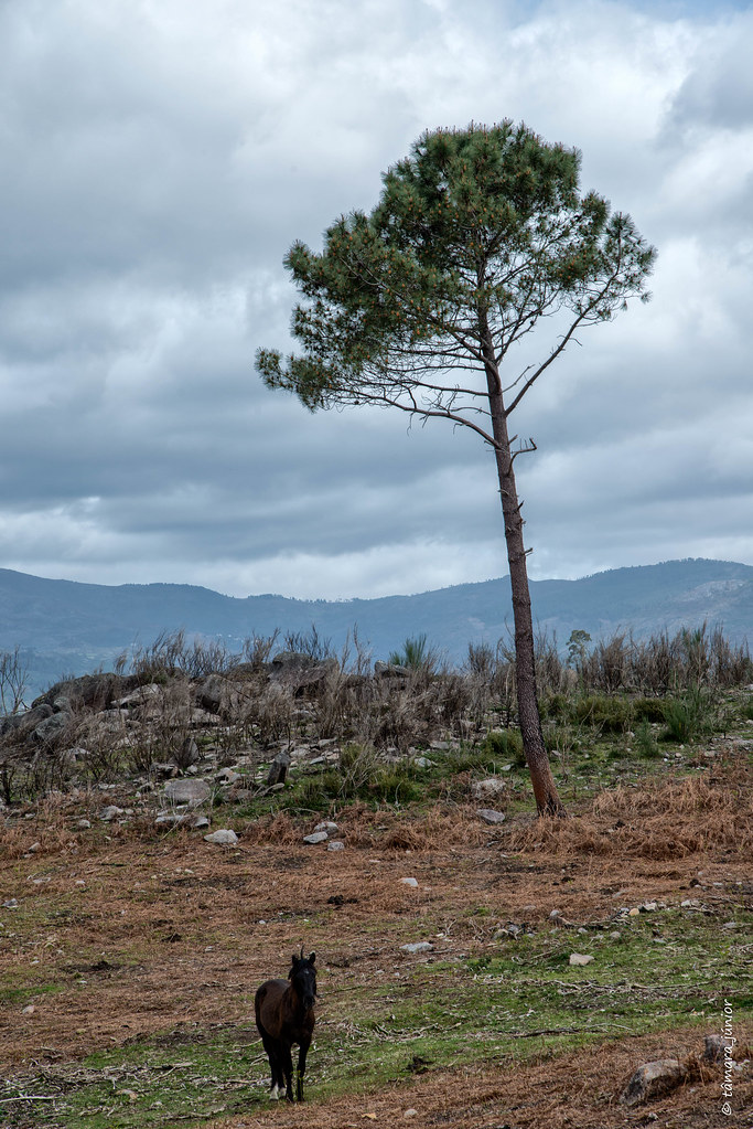 21.- 2018.- Trilho Interp. do Megalitismo de Britelo (64)