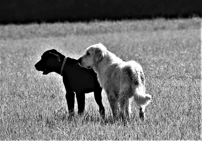 Dogs 05.06 (2)