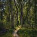 Through Tall Trees by trailbound69