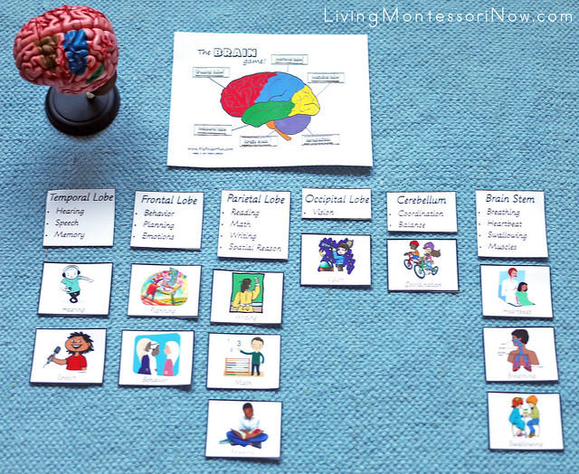 Brain Functions Layout