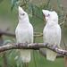 <p><a href=&quot;http://www.flickr.com/people/enyaw007/&quot;>Wayne Ellis1</a> posted a photo:</p>&#xA;&#xA;<p><a href=&quot;http://www.flickr.com/photos/enyaw007/42897456782/&quot; title=&quot;_DSC6981-2&quot;><img src=&quot;http://farm2.staticflickr.com/1833/42897456782_49332ee2df_m.jpg&quot; width=&quot;240&quot; height=&quot;159&quot; alt=&quot;_DSC6981-2&quot; /></a></p>&#xA;&#xA;
