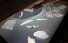 L'exposition Ours au Laténium (Hauterive, Suisse)