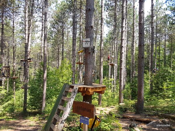 Treetop Trekking beginner courses