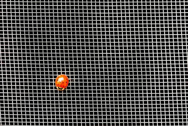 Ladybug In Ashes