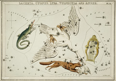 Sidney Hall's (1831) astronomical chart illustration of the Lacerta, Cygnus, Lyra, Vulpecula and the Anser. Original from Library of Congress. Digitally enhanced by rawpixel.