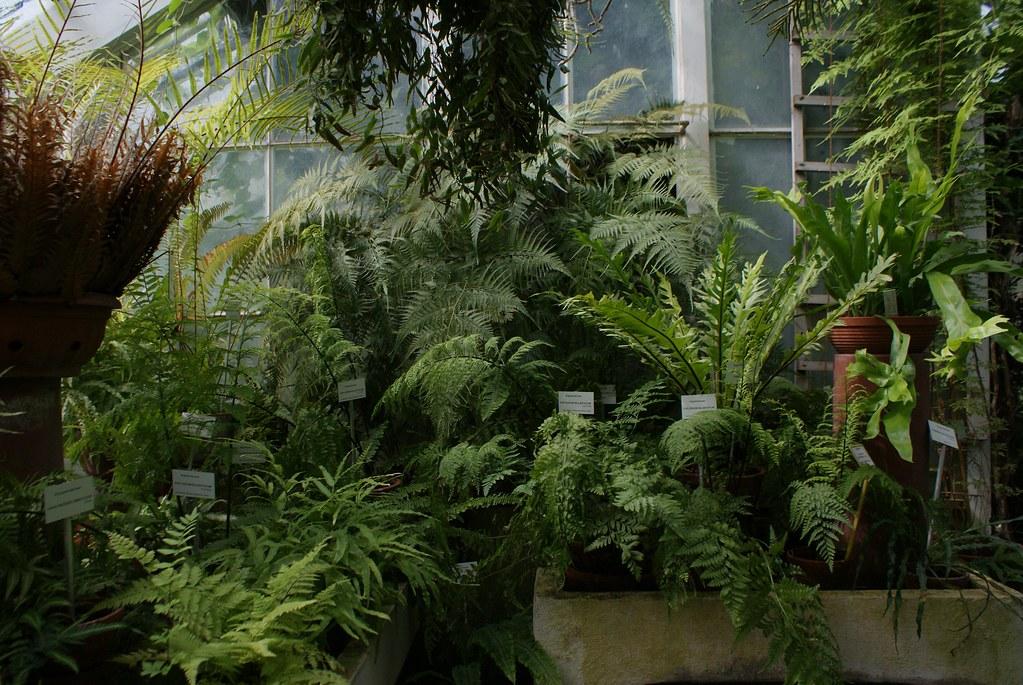 Jardin botanique à Cracovie.