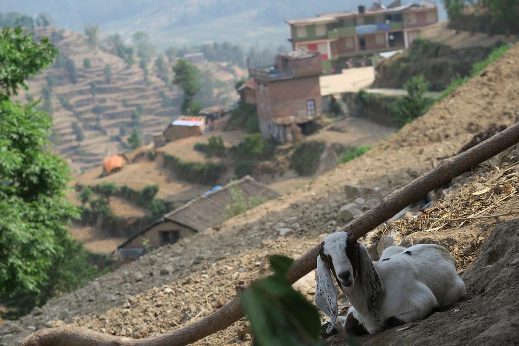 Lamichhane 2016 Nepal