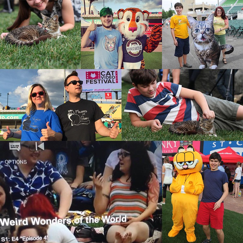 CatVidFest collage