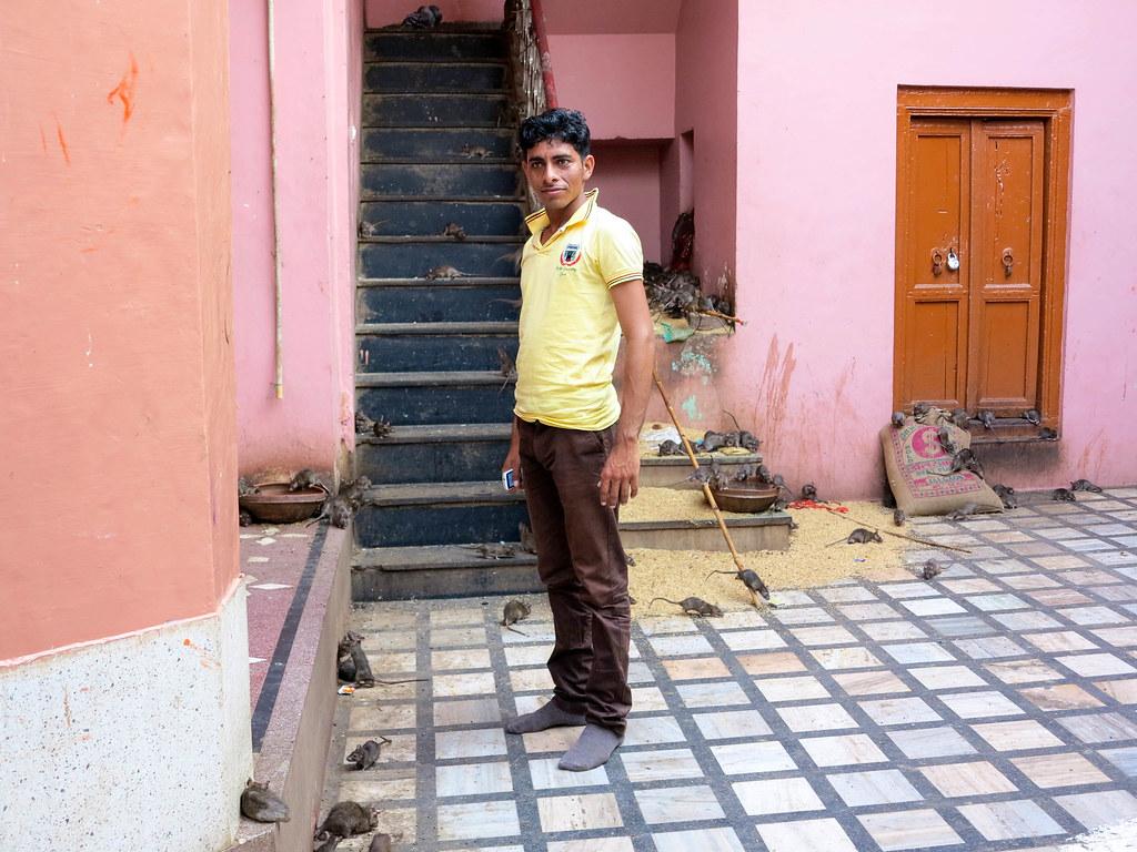 Templo de las ratas en India