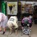 FX306229-1 The Dancing Grannies