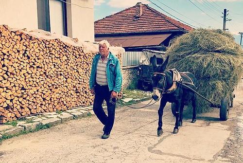 Feines al camp #Dobarsko #Bulgaria #Добърско #България