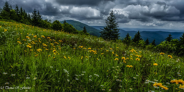 Summer Flowers Highland Scenic Highway