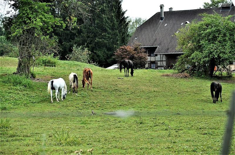 Horses 15.08 (6)