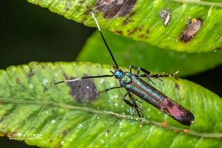 Moth - DSC_7455