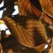 Leaves - Botolphs (31)
