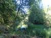 forêt du Ché - lac (sic) des biches