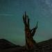 Perseid Meteor 1:01 am Monday Morning by Jeffrey Sullivan