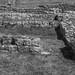 Old Stones - Corbridge Roman Town