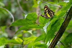 Bosque Guajataca  Isabela, Puerto Rico