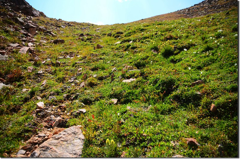 Looking up at the tundra slope from the middle slope