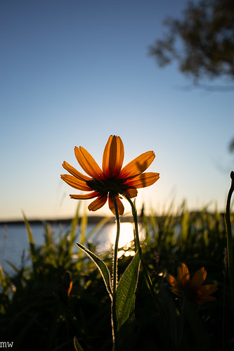 lakewinnipesaukee flower sunrise 6d 1740mm