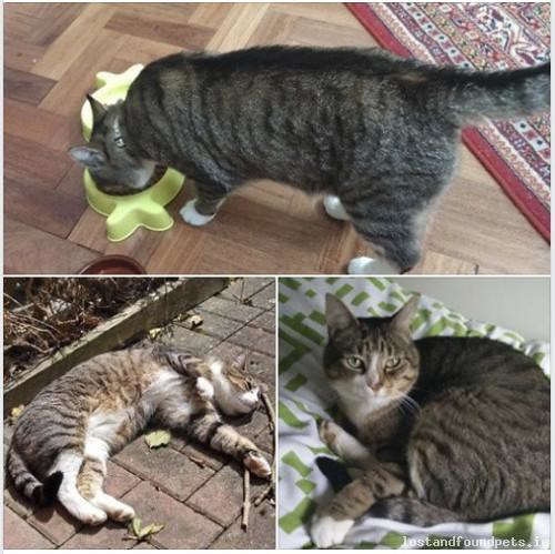 Sun, Aug 12th, 2018 Lost Male Cat - Yellow Furze, C15 D8w6, Meath