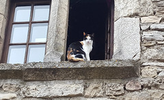 Kitty Cat at Medieval Window ...