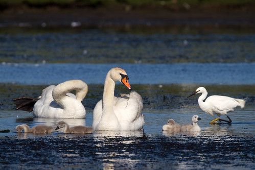 Signets | by Mike.Pursey
