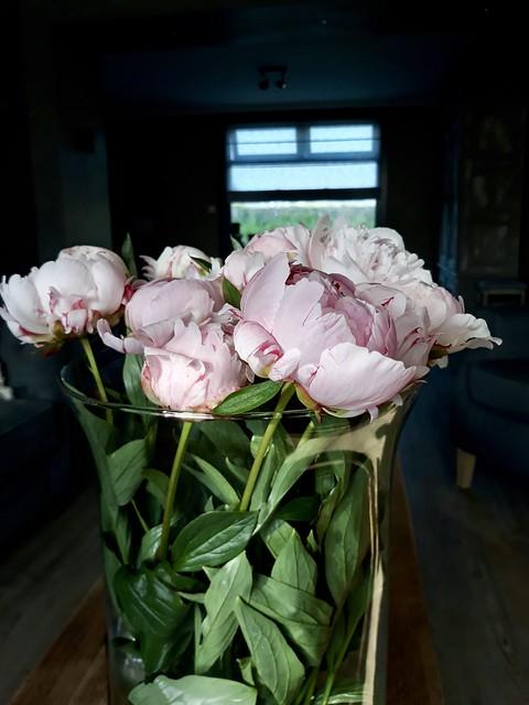 Glazen vaas met roze pioenrozen