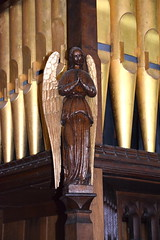 organ angel