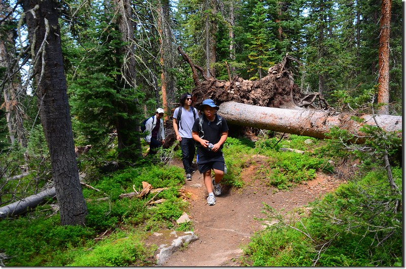 Columbine Lake Trail (5)