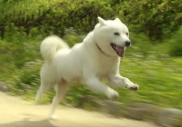 白戶次郎奔跑