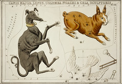 Sidney Hall's (1831) astronomical chart illustration of the Canis Major, Lepus, Columba Noachi and the Cela Sculptoris. Original from Library of Congress. Digitally enhanced by rawpixel.