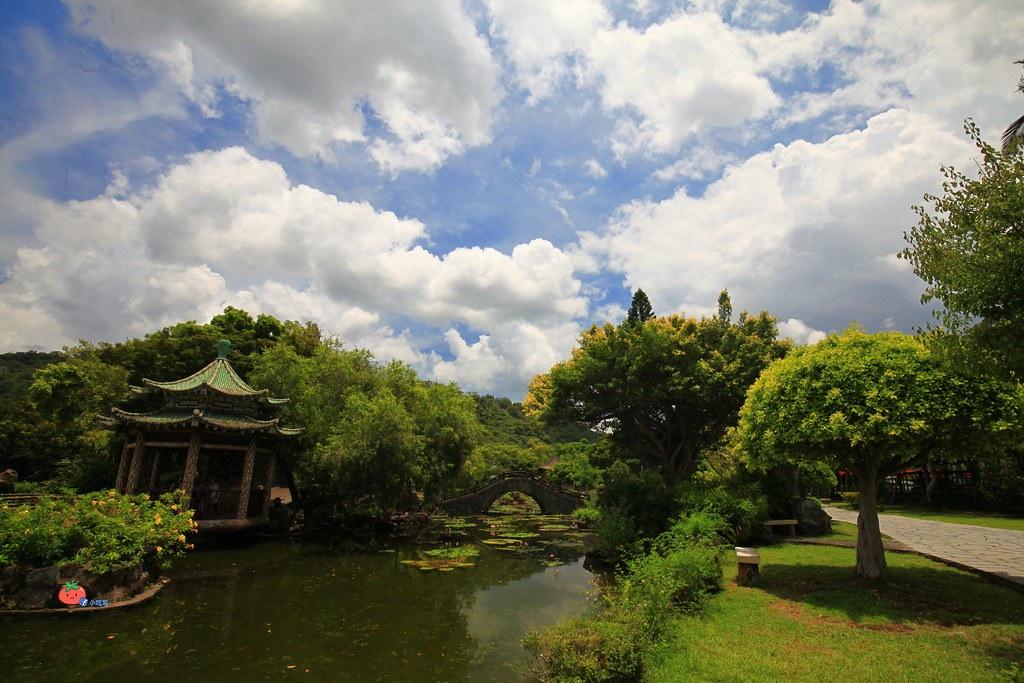 雙溪公園大王蓮