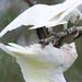 <p><a href=&quot;http://www.flickr.com/people/enyaw007/&quot;>Wayne Ellis1</a> posted a photo:</p>&#xA;&#xA;<p><a href=&quot;http://www.flickr.com/photos/enyaw007/29074018298/&quot; title=&quot;_DSC6986&quot;><img src=&quot;http://farm2.staticflickr.com/1837/29074018298_a3c8dc6f95_m.jpg&quot; width=&quot;240&quot; height=&quot;159&quot; alt=&quot;_DSC6986&quot; /></a></p>&#xA;&#xA;