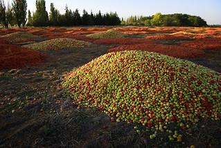 Tomato land 1