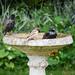 Just 3 birds sharing a bath...
