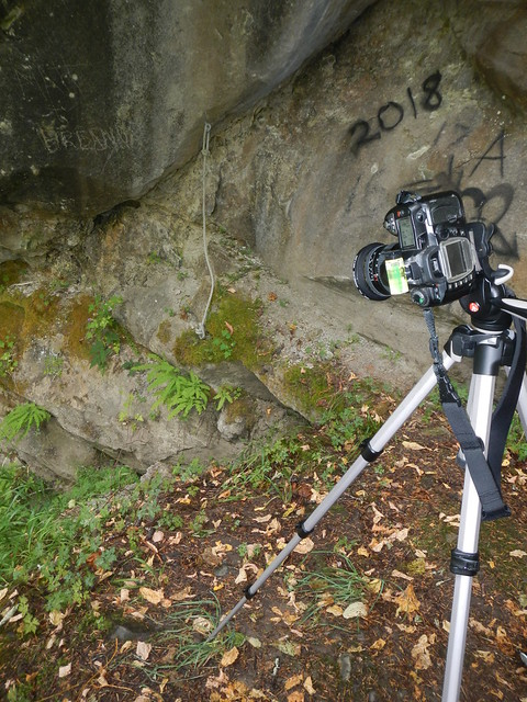 Behind the scenes: Ferns on the cliff face.