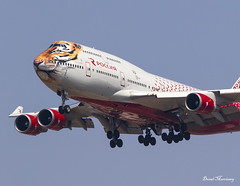 Rossiya (Caring for Tigers Together Livery) 747-400 EI-XLD