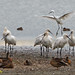 Little egret joins the party