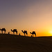 The Caravan (Thar Desert, India 2015) by Alex Stoen