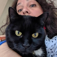 I photobombed @jodythompson__ 's cat's selfie. Uncertain if he forgives me for ruining his 'blue steel' moment but seemed to be fine with some tummy rubs and a treat. #Arthur #catsofinstagram #catsitting