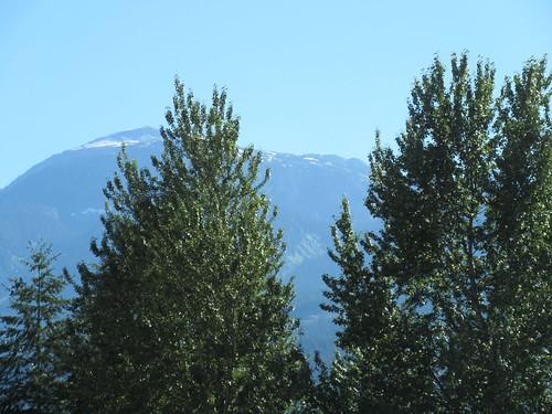 mountain trees revelstoke bc british columbia canada