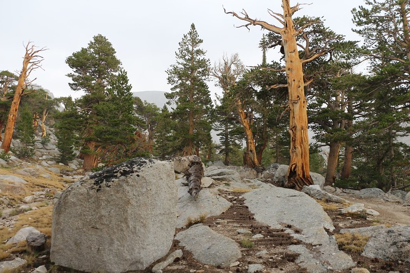 My view while hunkering down under a tree during a brief rain on the John Muir Trail